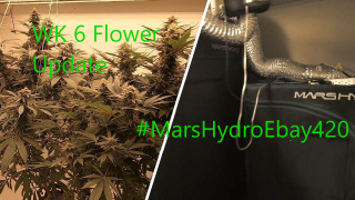 #MarsHydroEbay420 8ft x 4ft Grow Tent / WK 6 Flower Room Update
