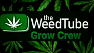 THE WEEDTUBE GROW CREW ♡ TWTGC