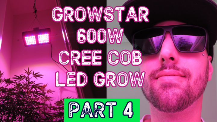 How To Grow Indoor Organic Cannabis Marijuana For The First Time (Part 4 HARVEST)