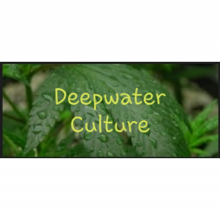 DWC  Marijuana Diaries DeepWater Culture Episode 2 TWTGC