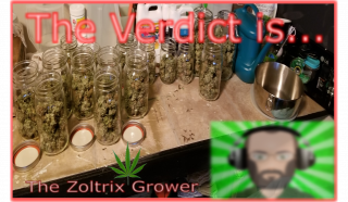 A Review of My Last Harvest | Strain Finally Named | Smoke and Chill | TWTGC