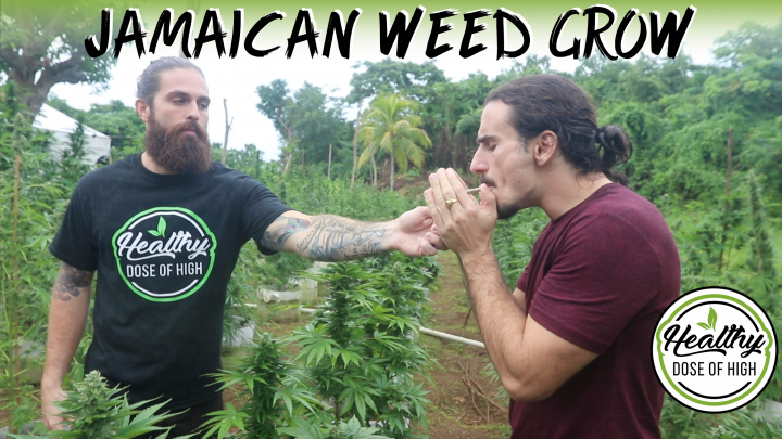 Cliff Diving at a WEED FARM!?