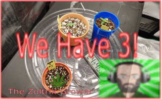 Up to Three! | Not Done Yet | Growing Under the Mars Hydro | TWTGC