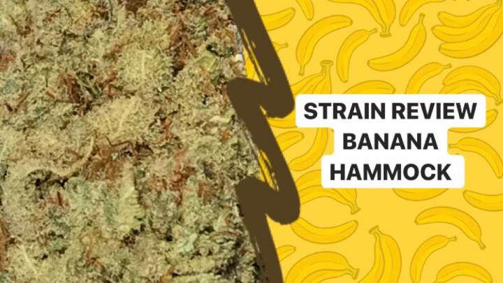 STRAIN REVIEW | BANANA HAMMOCK