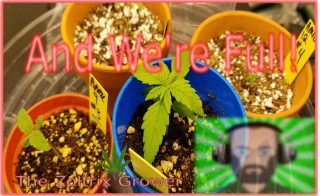 We Have A Full House! | They're Taking Off | Growing with Mars Hydro | TWTGC | #marshydroebay420