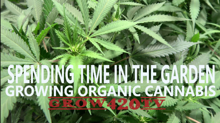 Spending Time In The Garden!!! Growing Organic Cannabis!!!