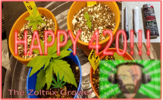 Happy 420-20! | Quick Garden Update | Growing with Mars Hydro | TWTGC