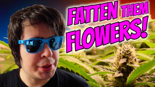 INDOOR CANNABIS GROW: FATTEN THEM FLOWERS!