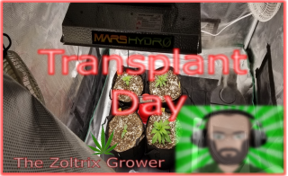 Transplant Day | Tent Reset | Growing with Mars Hydro | TWTGC