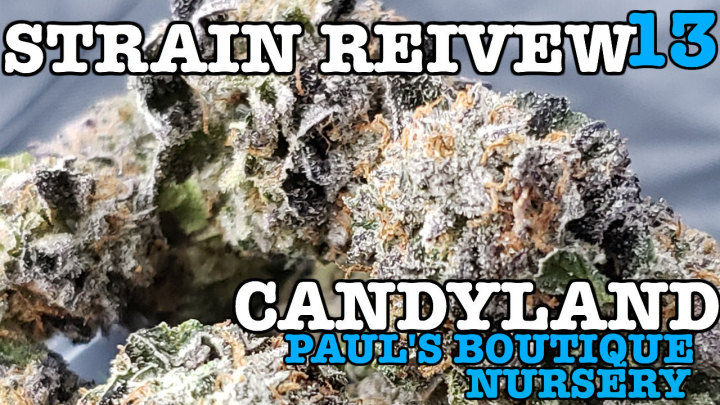 CANDYLAND STRAIN REVIEW 13 [GROWERS ONLY CO]
