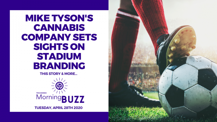 MIKE TYSON'S CANNABIS COMPANY SETS SIGHTS ON STADIUM BRANDING | TRICHOMES Morning Buzz