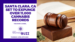 SANTA CLARA COUNTY SET TO EXPUNGE OVER 11,000 CANNABIS RECORDS | TRICHOMES Morning Buzz