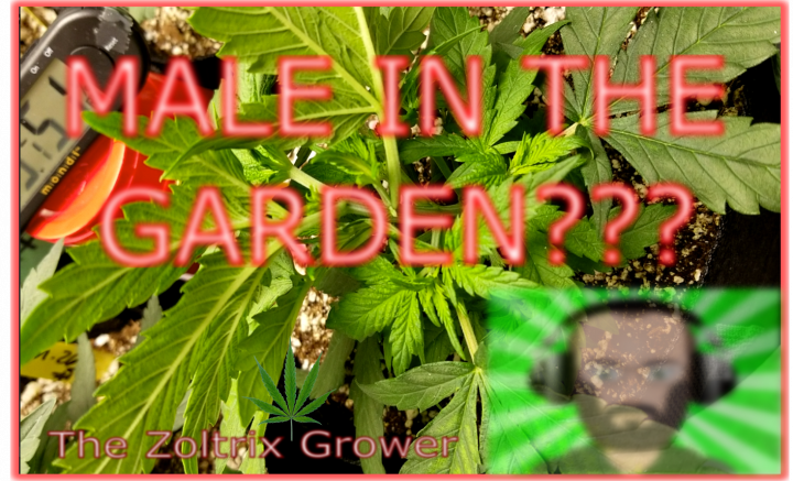 We Have A Male In The Garden!? | Mars Hydro Grow | TWTGC
