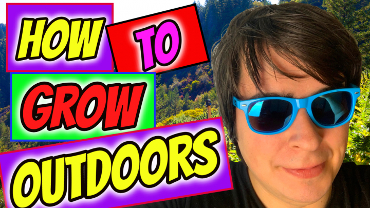 HOW TO GROW CANNABIS OUTDOORS IN 2020!
