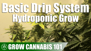 Drip System Hydroponics Timelapse Grow - Clone To Harvest