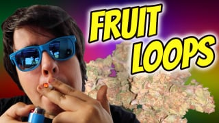 FRUIT LOOPS STRAIN REVIEW!