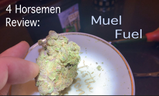 NJ Medical Dispensary Strain Review: Muel Fuel (Harmony Dispensary, Secaucus NJ)