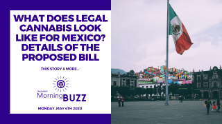 MEXICO RELEASES DETAILS OF PROPOSED CANNABIS LEGALIZATION BILL | TRICHOMES Morning Buzz