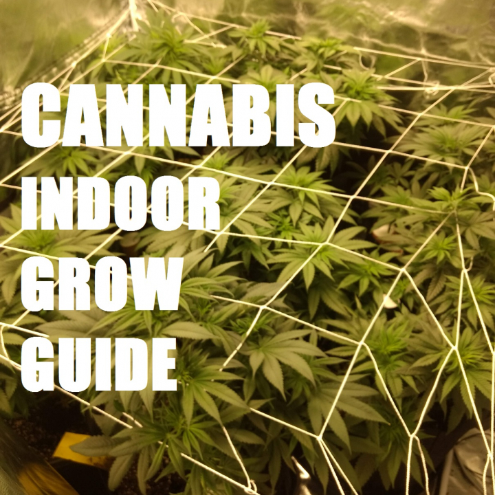 STEP BY STEP SEED TO HARVEST INDOOR CANNABIS GROW