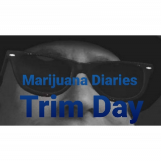 Marijuana days ♡ Trimming & Talking