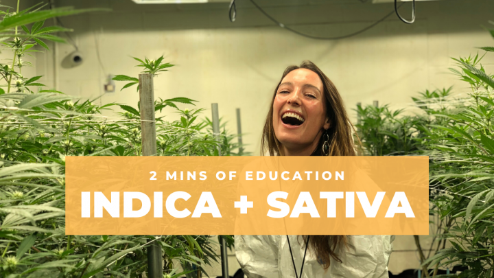 Indica + Sativa: Do They Matter?