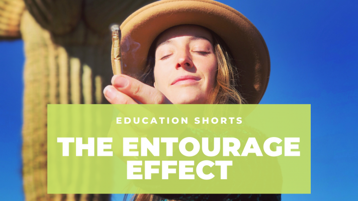 The Entourage Effect Explained in 3 Mins