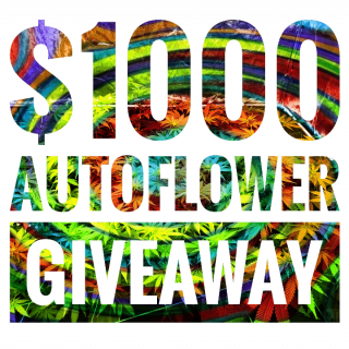 $1000 Autoflower seeds GIVEAWAY