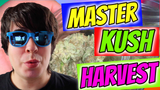 INDOOR CANNABIS GROW: MASTER KUSH HARVEST, DRYING, CURING!