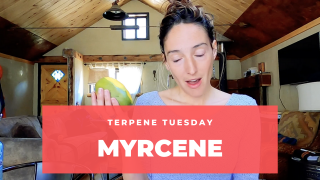 The Most Common Terpene in Cannabis - Myrcene