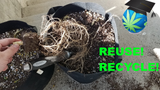 3 Ways To Get MORE USE From Cheap, Root-filled, Used Soil