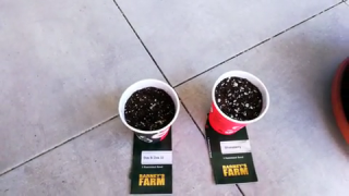 My new seeds 5