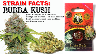 CROP KING SEEDS - BUBBA KUSH STRAIN FACTS