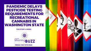 PANDEMIC DELAYS PESTICIDE TESTING REQUIREMENTS FOR CANNABIS IN WASHINGTON | TRICHOMES Morning Buzz
