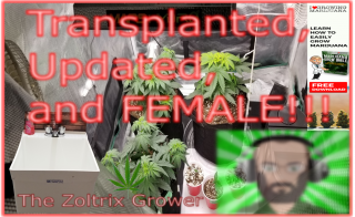 Transplanted, Updated and Female | Growing under Mars Hydro | TWTGC