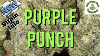 Purple Punch