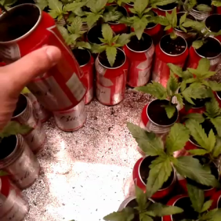 177 plants in beer cans #BeerCanGrowChallenge