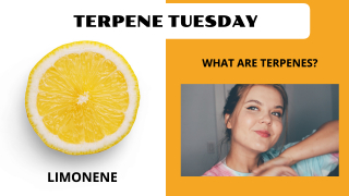 What Are Terpenes? Limonene Break Down