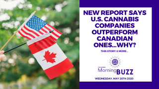 NEW REPORT SHOWS U. S. CANNABIS COMPANIES ARE OUTPERFORMING CANADIAN ONES | TRICHOMES MORNING BUZZ
