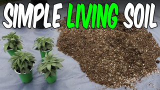 Organic OG Kush from Seed Indoor Grow Ep. 1 : Living Soil for Cannabis
