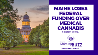 MAINE LOSES FEDERAL FUNDING OVER MEDICAL CANNABIS | TRICHOMES Morning Buzz