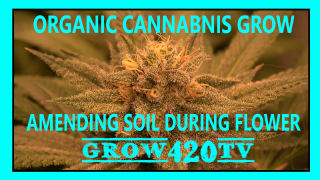 Organic Cannabis Grow!!! Amending Soil During Flower!!!