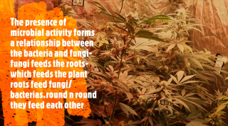 Exploring the soil web / Happy Friday with Dutchman420