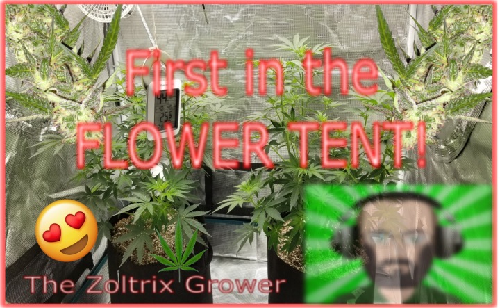 First to Flower! | New Tent in Action | Mars Hydro Grow | TWTGC