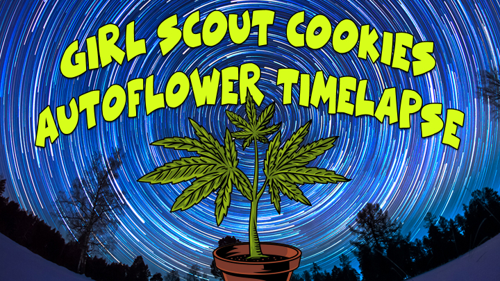 TIMELAPSE GROW - Girl Scout Cookies - Seed to Harvest