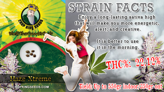Haze Xtreme Regular Marijuana Seeds Strain Facts Crop King Seeds