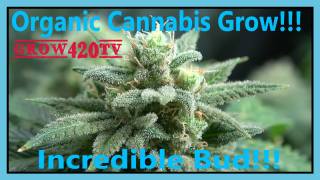 Organic Cannabis Grow!!! Incredible Bud!!!
