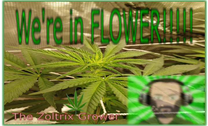 Week 1 of FLOWER | Mail Call | Growing with Mars Hydro | TWTGC