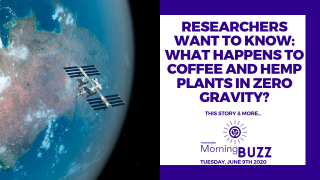 RESEARCHERS WANT TO KNOW WHAT HAPPENS TO COFFEE AND CANNABIS IN SPACE | TRICHOMES Morning Buzz
