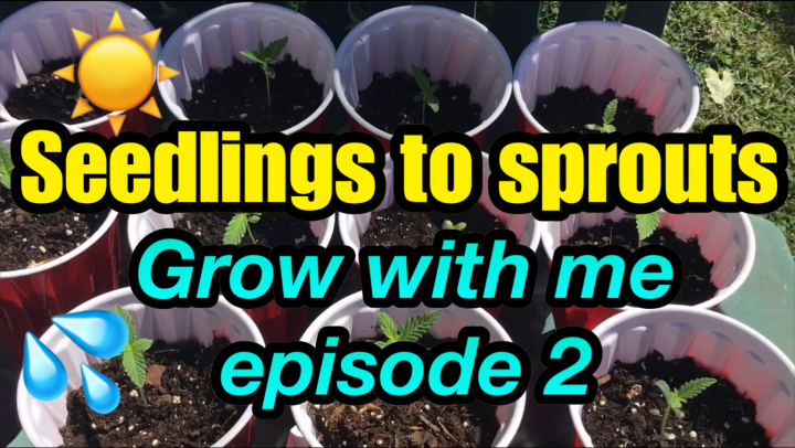 Seedlings to Sprouts *Grow with me part 3*