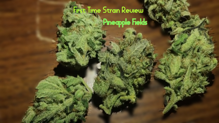 (First Time Strain Review)  Pineapple Fields
